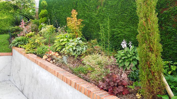 empêcher mauvaises herbes massif