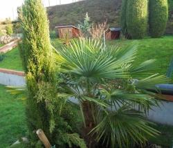 photo-1-scene-palmier
