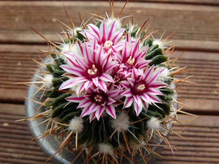 Les plantes succulentes inspirations desjardins for Belle plante exterieur