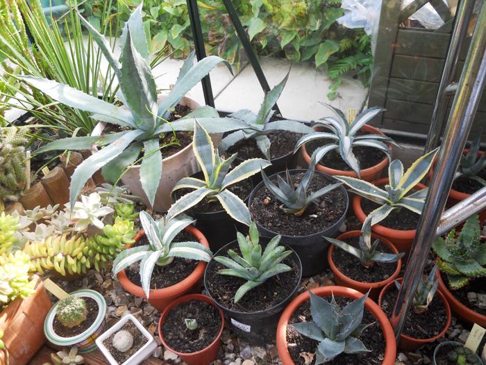 les plantes succulentes inspirations desjardins. Black Bedroom Furniture Sets. Home Design Ideas