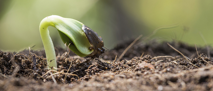 closeup seed root on soil new life start concept