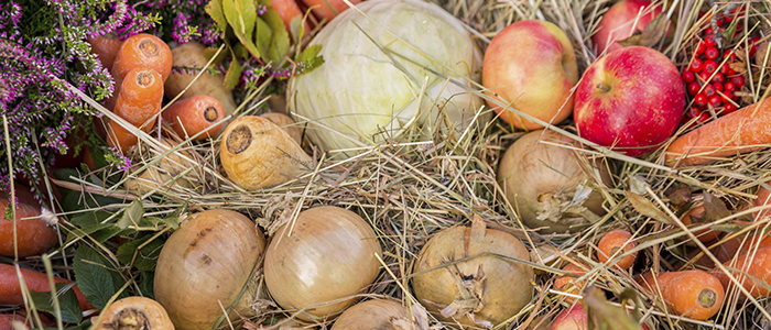 several different kinds of vegetables and fruits such as carrots, onions, parsnips, cabbage and apples in a bed of hay