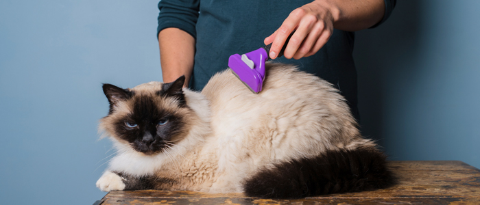 Birman-brosse-table