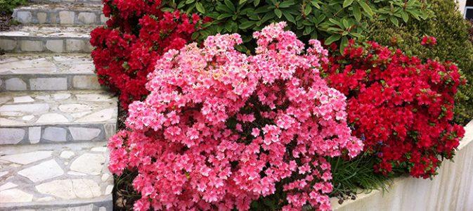 Plantes de terre acide ou terre de bruy re inspirations desjardins - Acide citrique ou acheter ...