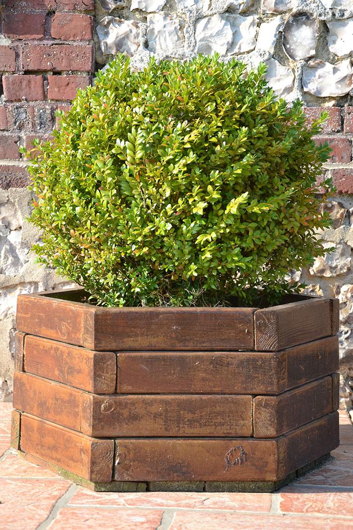 Quel arbuste en pot arbustes des lots petit prix arbustes - Quel arbuste planter en octobre ...