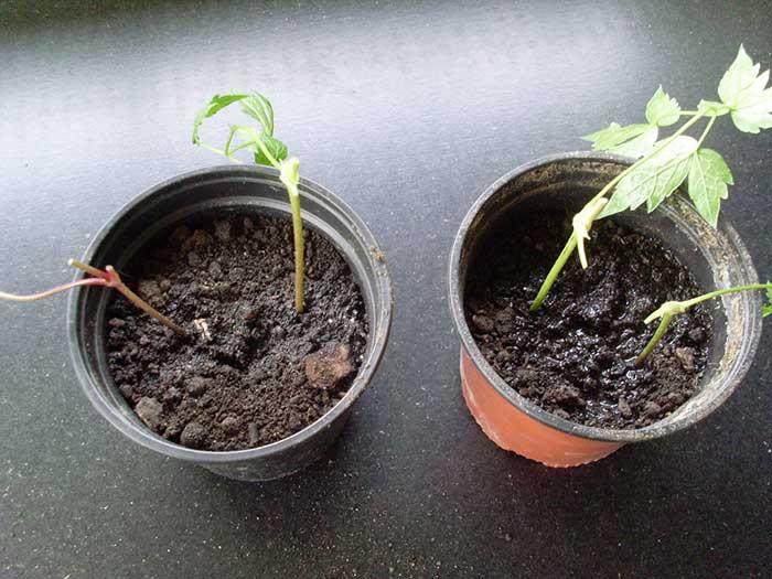 Arbuste persistant en pot vous pourrez les associer dans for Faux palmier ikea