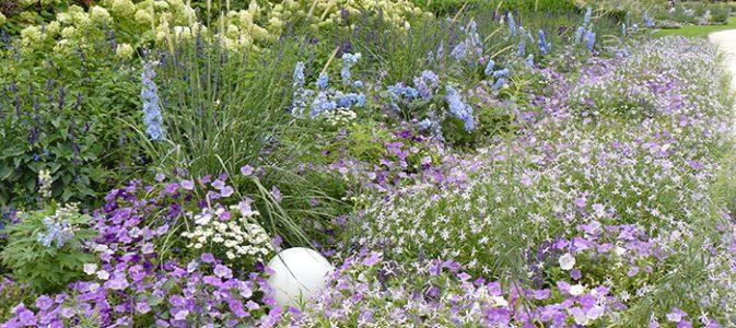 Cultiver les plantes annuelles inspirations desjardins for Plante annuelle