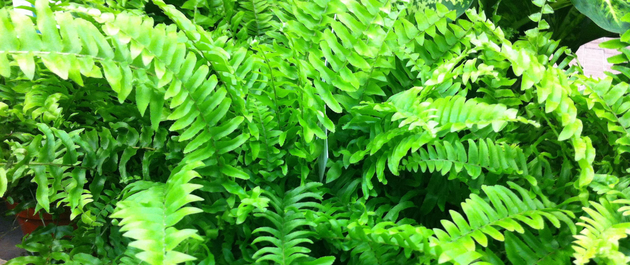 Plante anti humidit sanotint light tabella colori - Plante interieur anti humidite ...