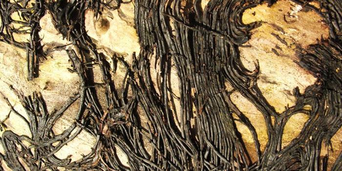 Les marronniers inspirations desjardins - Detruire souche arbre rapidement ...