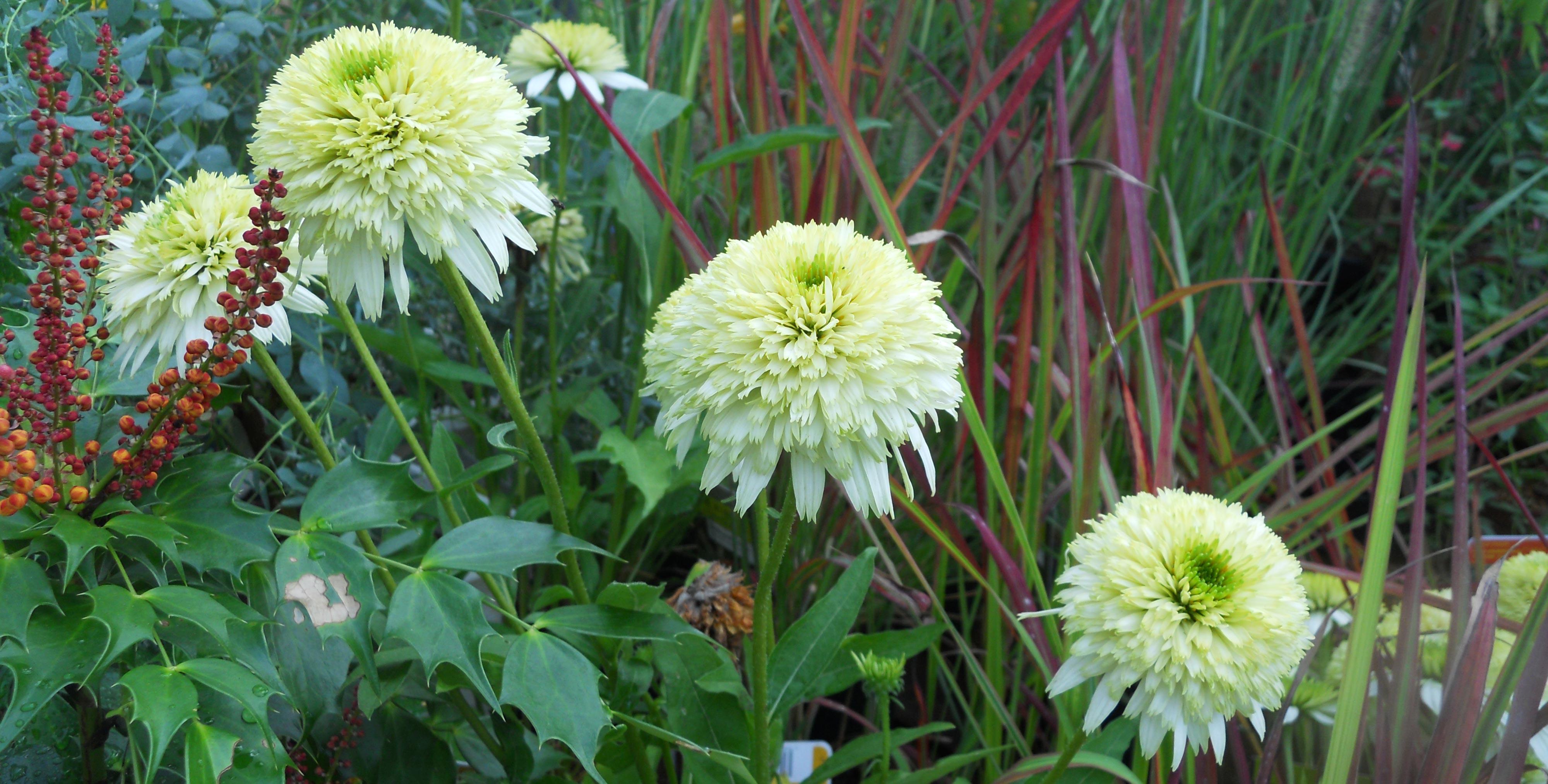 Les plus belles plantes vivaces for Les plantes vivaces