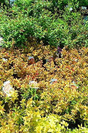 Plante exterieur sans entretien cr ation d 39 un jardin sec allauch cr ation et entretien l - Plante exterieur sans entretien ...