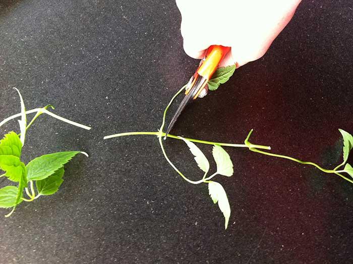 Les Plus Belles Vivaces A Longue Floraison Inspirations Desjardins