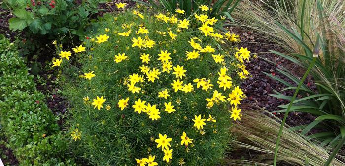 Les plus belles vivaces a longue floraison inspirations - Fleurs vivaces longue floraison ...