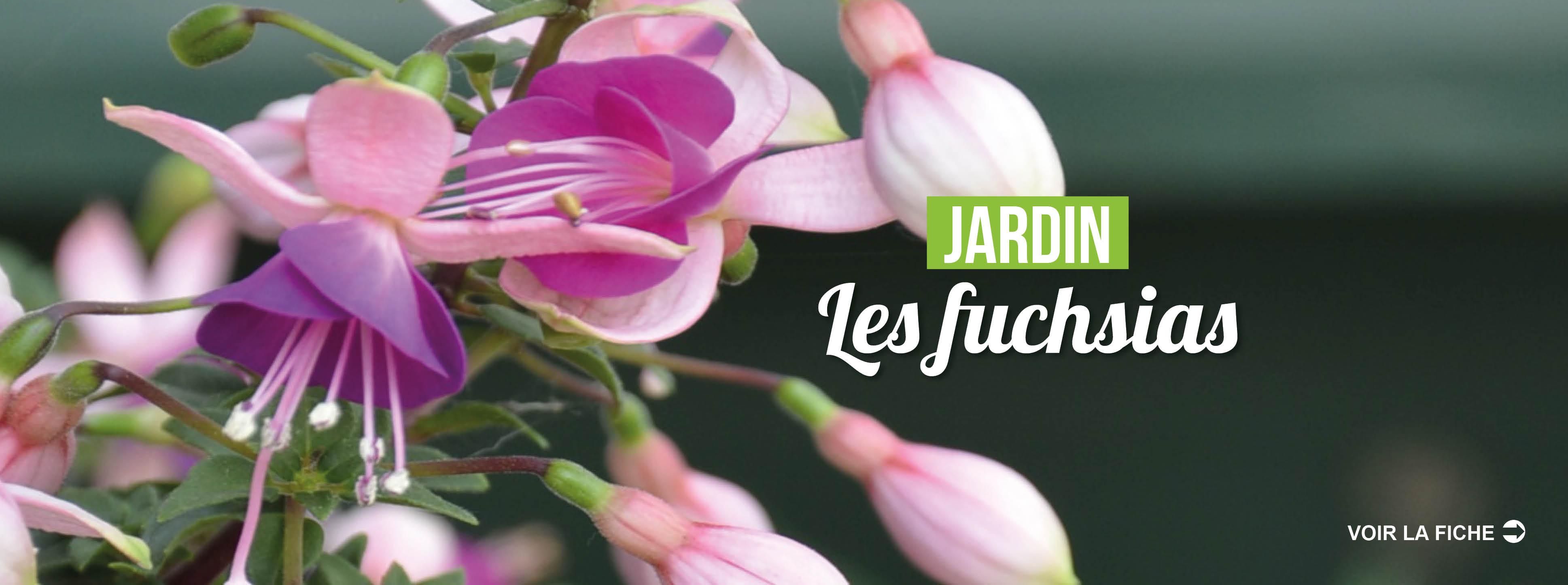 http://www.desjardins-inspirations.fr/les-fuchsias/