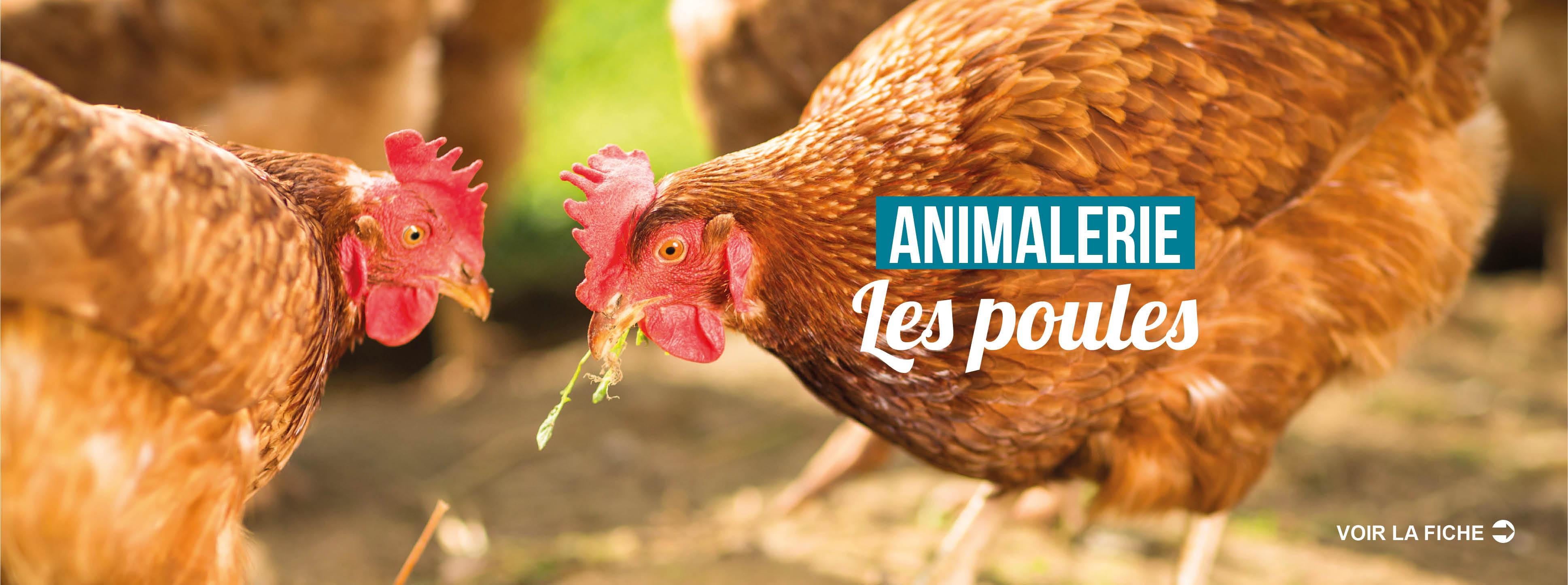 SLIDE-Accueil-_Les poules_ok