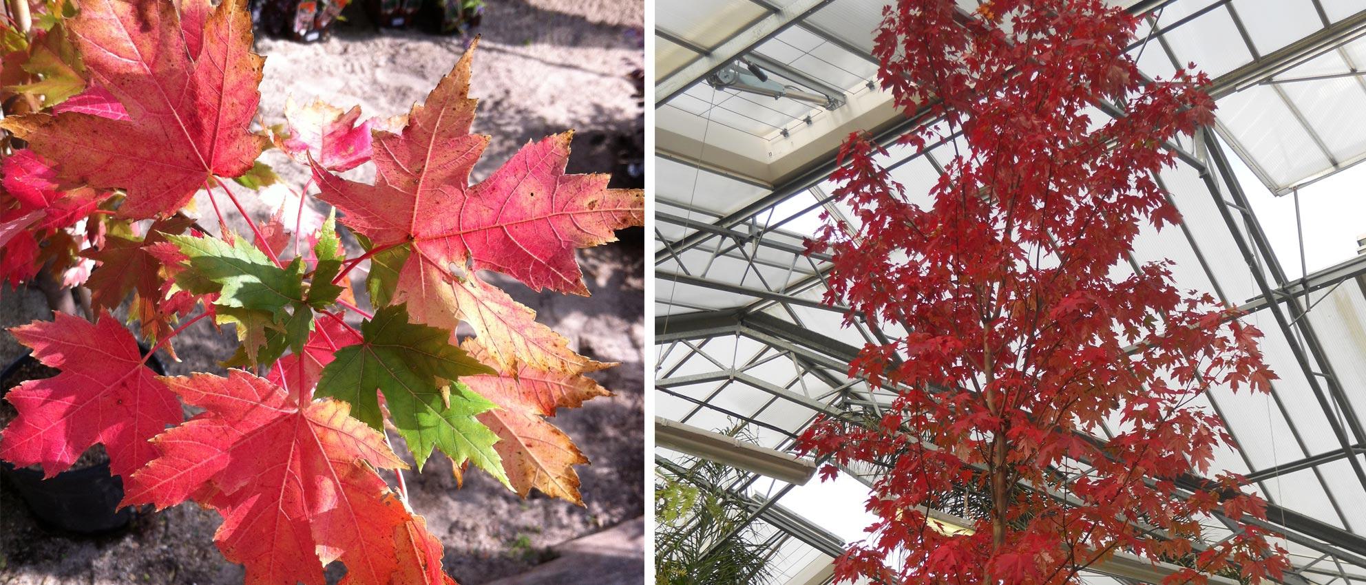 les plus beaux feuillages d'automne   inspirations desjardins