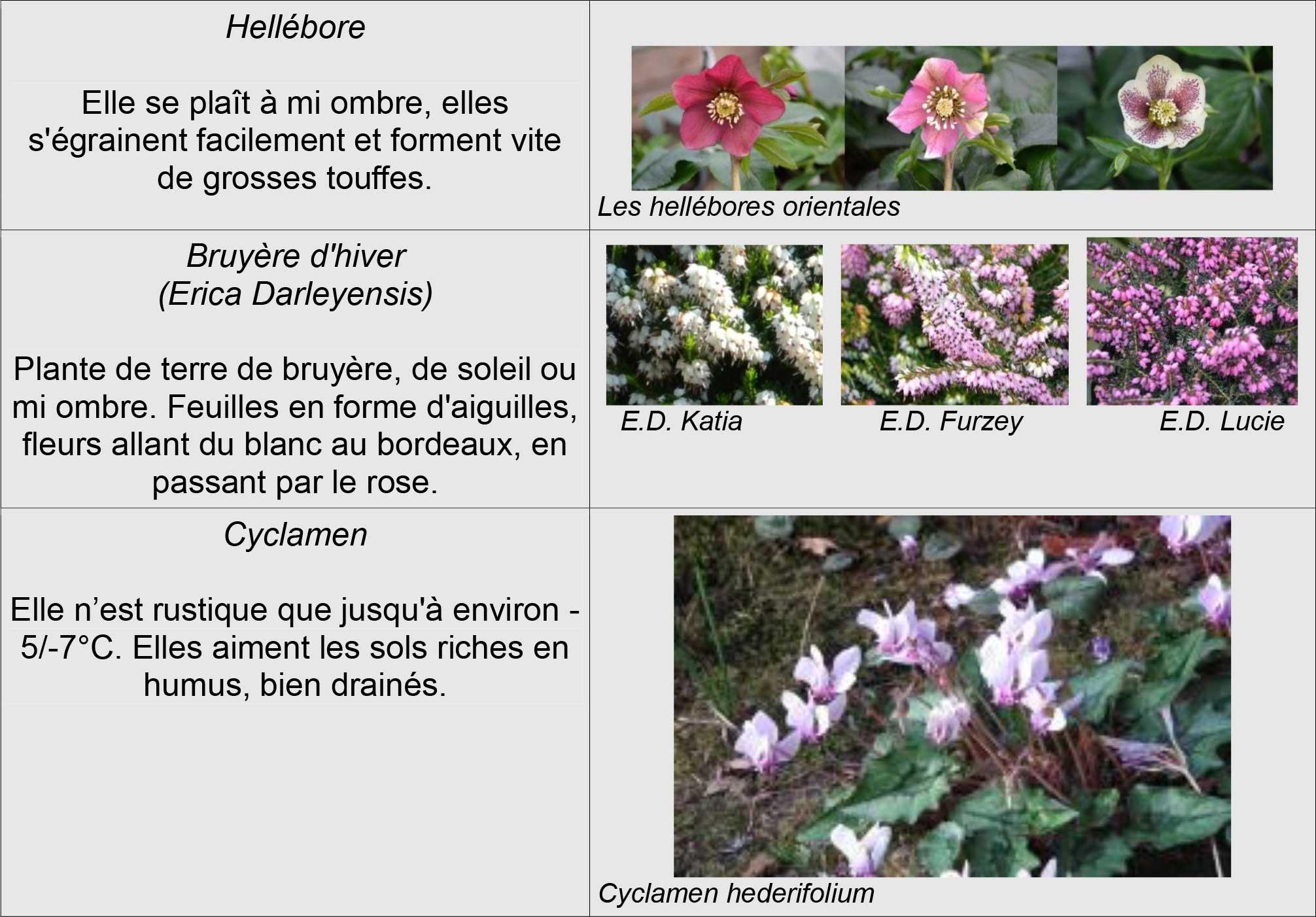 Floraison hiver inspirations desjardins for Floraison hiver