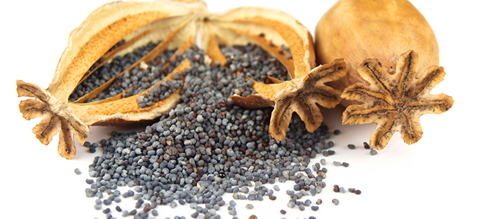Poppy seeds and heads isolated on white