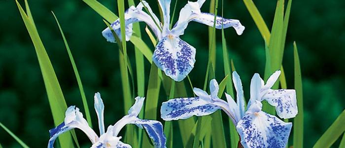 Les plantes de bassin