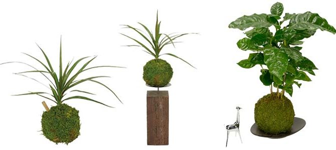 l 39 art du kokedama inspirations desjardins. Black Bedroom Furniture Sets. Home Design Ideas