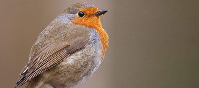 les oiseaux du ciel   inspirations desjardins