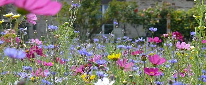 Realiser sa jachere fleurie inspirations desjardins - Fleur de jachere ...