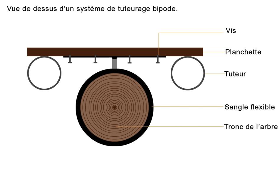 Système de tuteurage bipode