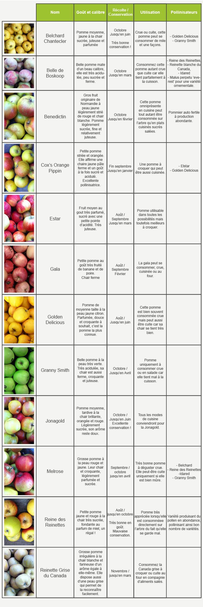 tab_variétés_pommes