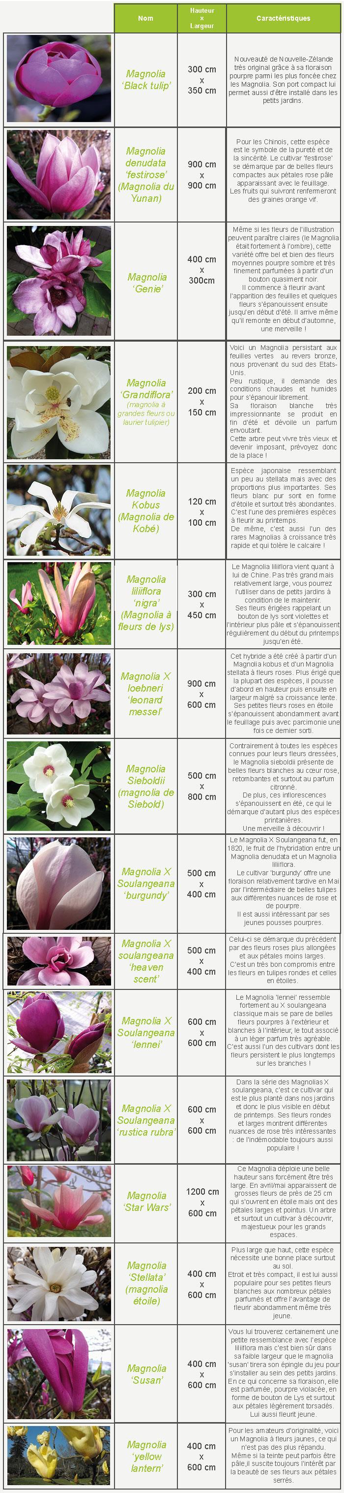 tablo magnolias
