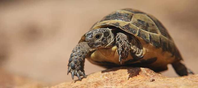La tortue de terre inspirations desjardins - Images tortue ...