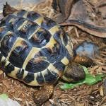 eviter les dangers-tortue de terre